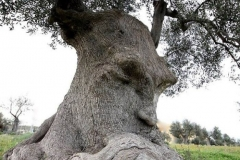 Wise Old Tree