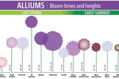 bloom-chart
