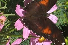 flowers-an-butterfly
