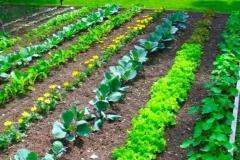 Perfect Backyard Vegetable Garden Design Plans Ideas