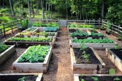 rasied-garden-beds
